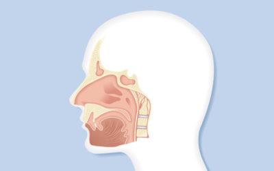 Chronische Sinusitis – Richtig erkennen & behandeln