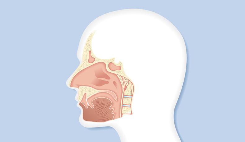 Die Nebenhöhlen der Nase